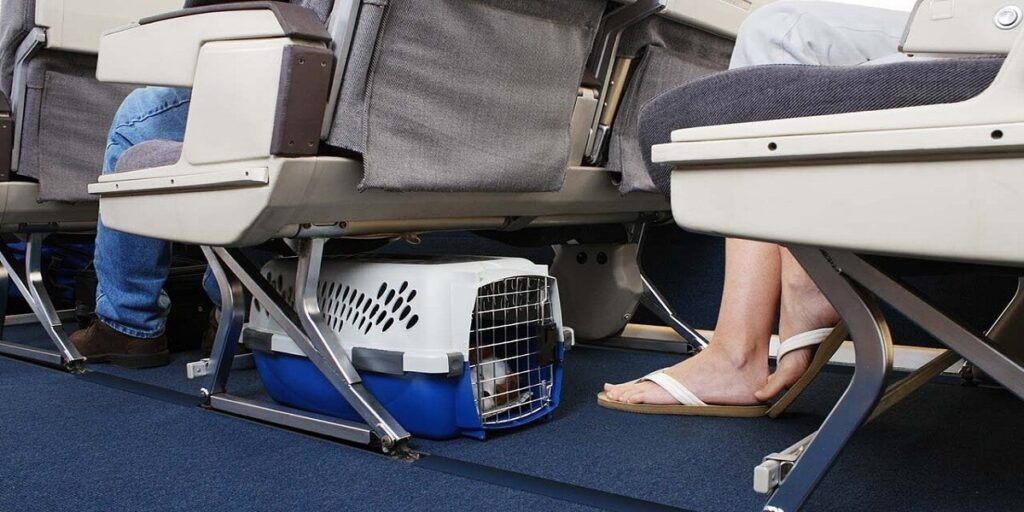 Hainan Airlines Pet Policy Reviews